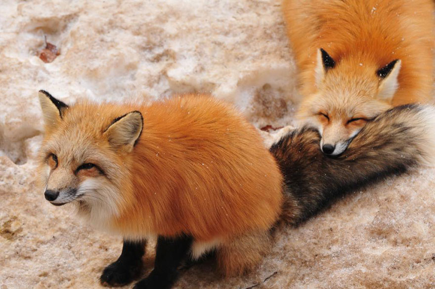 FoxVillage10