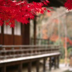 Загадки Японии: цифра 7 и боги счастья